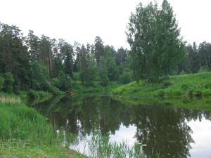 Небурчиловская дача 029